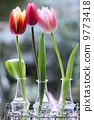 tulip, tulipa, bloom 9773418