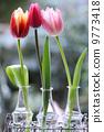 꽃, 튤립, 코트 9773418
