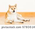 animal pet Inu 9780614