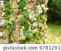 bark, foliage, ivy 9781291