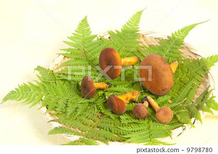 Mushroom / Tita 9798780
