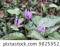 꽃, 공예, 가련 9825952