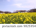 꽃밭, 유채 꽃, 유채 9825954