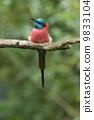 Northern Carmine Bee-Eater 9833104