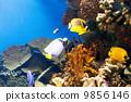 海洋 水下 魚 9856146