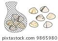 baby-neck clam, vector, vectors 9865980