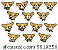 Dog (Chihuahuasa) 9919659