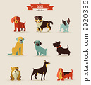 Dogs icons and illustrations 9920386
