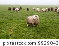 霧 農場 家庭 9929043