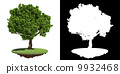 Lush Green Tree Isolated on White Background. 9932468