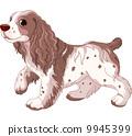 Spaniel dog 9945399