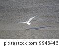 migratory, bird, seagull 9948446