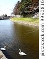 Hikone castle 9950816