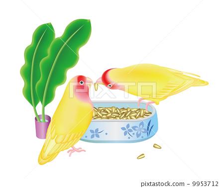 凤头鹦鹉 鹦鹉 金刚鹦鹉 9953712