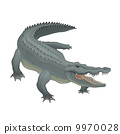 crocodile, animal, vector 9970028