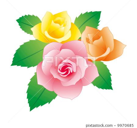장미 꽃 9970685