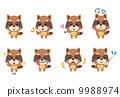 浣熊動物姿勢面部表情 9988974