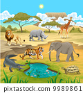 African animals in the nature. 9989861