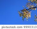 ผลไม้ของปลาเทราท์สีรุ้ง 9990313