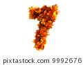 自然 秋天 树叶 9992676