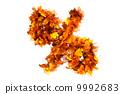 自然 树叶 秋天 9992683