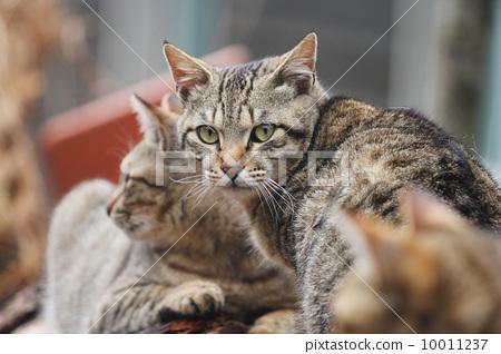 貓 10011237