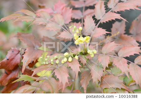 히 이라기의 꽃 10016388