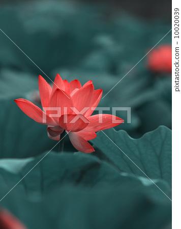 Lotus 10020039