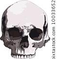 vector, skull, illustrations 10033652