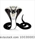 国王 眼镜蛇 蛇 10036683