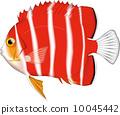 薄荷神仙魚 10045442