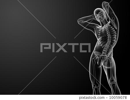 3d rendered skeleton - bottom view 10059078
