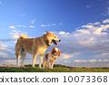dog dogs sky 10073368