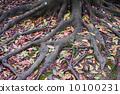 树叶 树 树木 10100231