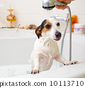 Dog taking a bath in a bathtub 10113710