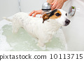 Dog taking a bath in a bathtub 10113715