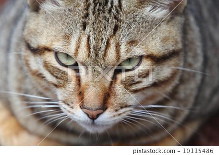 cat 10115486
