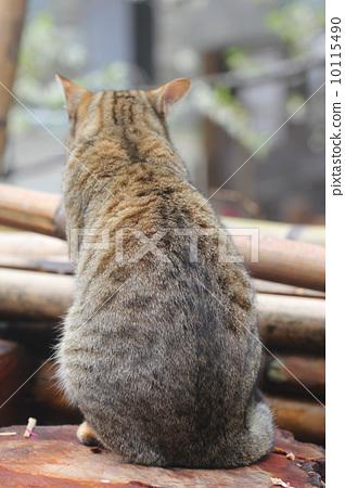 cat 10115490