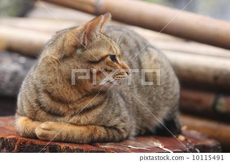 cat 10115491