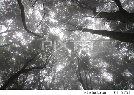 forest 10115751
