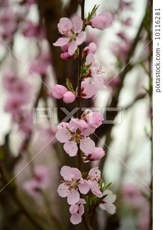 Flower thigh 10116281