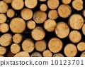 ตัดไม้,ไม้,ขอนไม้ 10123701