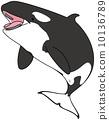 逆戟鯨 海豚 鯨魚 10136789