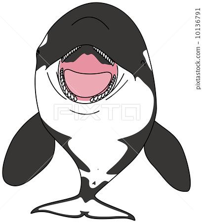 逆戟鲸 海洋生物 海豚 10136791