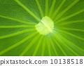 Lotus leaf 10138518