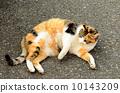 貓 10143209