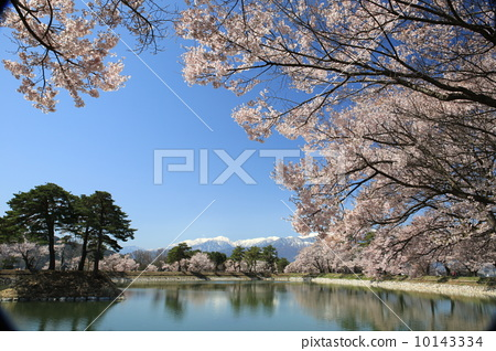 Cherry blossoms at the water 10143334