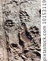 puddle, step, animal 10153119