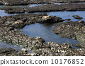 Pacific Ocean tidal pools 10176852