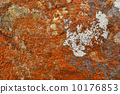 Orange lichen moss on rock 10176853